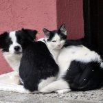 TOPLIJE JE UZ NEKOG: Pas i maca iz Užica osvojili Internet svojim zagrljajem!