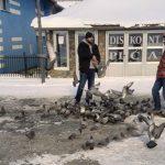 """BRAVO, BRAVO: Momci iz Sjenice na """"debelom minusu"""" hrane ptice!"""