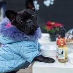 PA SJAJNO: Otvoren prvi pseći restoran na Adventu u Zagrebu!