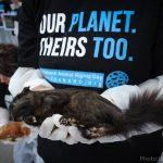 """SUBOTA: Marš za prava životinja – """"MI SMO NJIHOV GLAS""""!"""