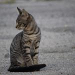 BANJA LUKA: Mačka ušetala u trafo – stanicu i ostavila pola grada bez struje