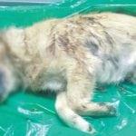 BAR: Pas na ivici života zamotan u plastičnu kesu i bačen u kontejner!