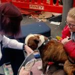 Udruženje za zaštitu životinja deli tople kaputiće za pse beskućnika!