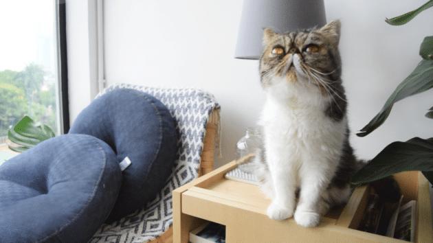cat friendly petface