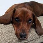 Nauka potvrdila: Psi ZAISTA mogu biti ljubomorni!