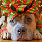 Pet poklona koje bi svaki pas poželeo za novogodišnje praznike!