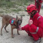 HERCEG NOVI: REKS jedini pas tragač u Crnoj Gori!