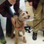 Upoznajte Dafija, psa koji danas PRVI PUT vidi i zbog toga je pustio suzu!