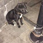 Maja je pronašla psa, OSTAVLJENOG I VEZANOG ZA BANDERU, kod Vukovog spomenika!