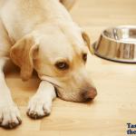 Kako da izbegnete alergije na žitarice kod pasa?