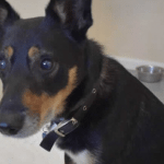 Slepi pas Bili pre četiri godine spasen iz skladišta, a još čeka svoj pravi dom!