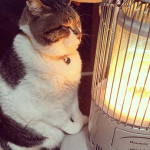 PRESLADAK: Mačak Busao gaji posebnu ljubav prema grejalici!