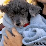 Vlasnik rekao veterinaru da uspava psa jer je SUVIŠE GLUP