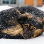 Hačiko iz Kuršumlije: Pas čeka vlasnika, koji je preminuo, već godinu dana!