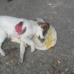 UŽAS U KRALJEVU: Psi izbodeni nožem, dok su spavali u svojim kućicama!