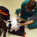 KAKVA LJUBAV: Izgladneli psi nađeni zajedno nisu odustali jedan od drugog!