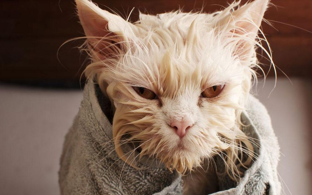 higijena macaka petface