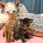 DIVNO: Keruša Lulu brine o mačićima dok ne nađu novi dom!