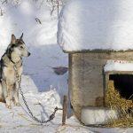 SJAJNO: Veterinar je proveo noć u psećoj kućici kako bi pokazao koliko je hladno!