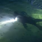 SPLIT: Ronioci u moru pronašli psa sa vezanim kamenom oko vrata!