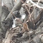 KRAGUJEVČANI VOLE ŽIVOTINJE: Spasena maca koja je danima bez vode i hrane bila na drvetu!