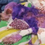 Maltezer Violet zamalo da ugine od ljudske farbe