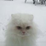 ČEKAJUĆI SNEG: Ljubimci koje zimske čarolije (ne) oduševljavaju!