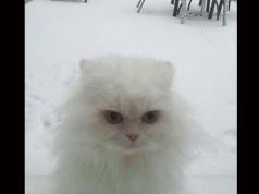 zimske-čarolije- petface