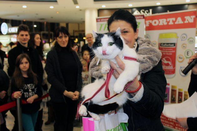 mačke Beograda petface