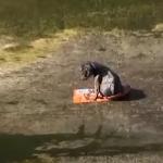 PRETUŽNO: Maleni psić sedeo je na smeću dva dana, sa odsečenom nogom!