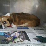 KRAGUJEVAC: Psa Milicu, koja je pomagala deci sa invaliditetom, udario auto i TREBA POMOĆ!