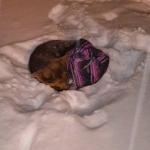 ZAJEČAR: Prva žrtva hladnoće je pas, koji se UKOČIO OD HLADNOĆE!