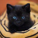 I MOJE KRZNO JE SREĆNE BOJE: Zašto niko ne udomljava crne mačke?