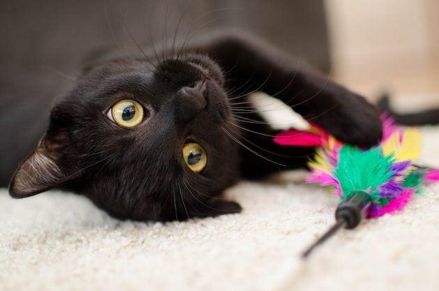 crne mačke petface