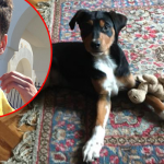 NOVI SAD: Radenko je UŠAO U KONTEJNER, kako bi izbavio psa, koji je plakao i cvileo!