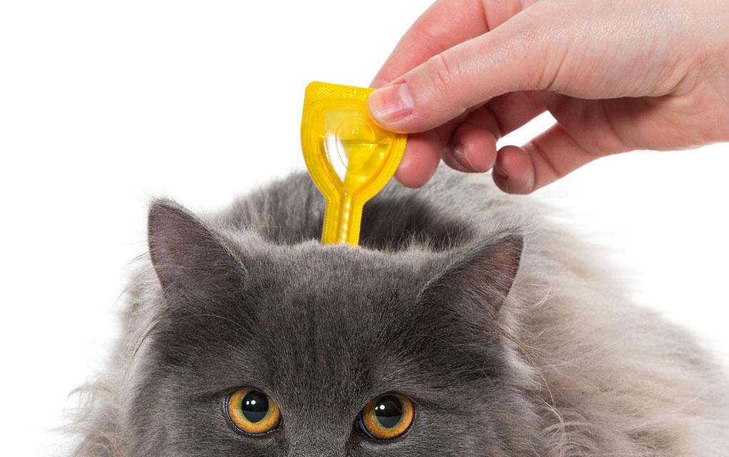 Kako ukloniti krpelje sa mačke?