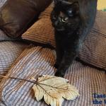 """Mačka Balu poklanja vlasniku lišće jer on ne voli """"žive poklone"""""""