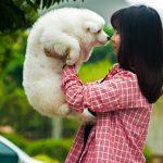 Novo istraživanje: Psi svoje vlasnike vide kao roditelje!