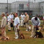 SREMSKA MITROVICA: Dok služe kaznu, zatvorenici brinu o napuštenim psima!