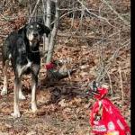 Ovog psa je vlasnik ostavio u šumi, vezanog za drvo, uz poruku da više ne može brinuti o njemu!