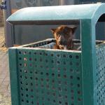 Tužni preplašen pas pronađen u KANTI ZA SMEĆE