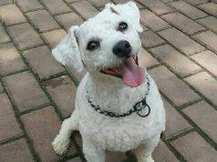 ogrlice za pse mogu biti opasne