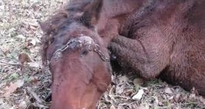 ovog konja petface
