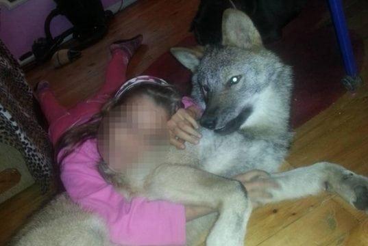 češki vučji pas petface