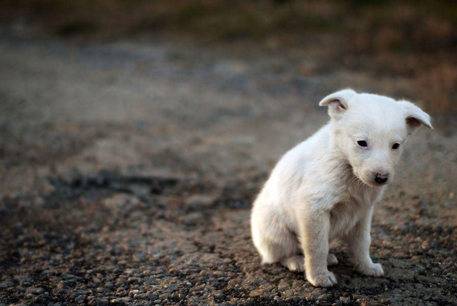 Humanitarni turnir za napustene pse