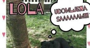 Lola petface