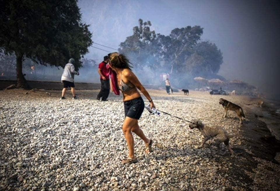 GRČKA GORI: Prve fotografije pasa iz požarom zahvaćene Atine!