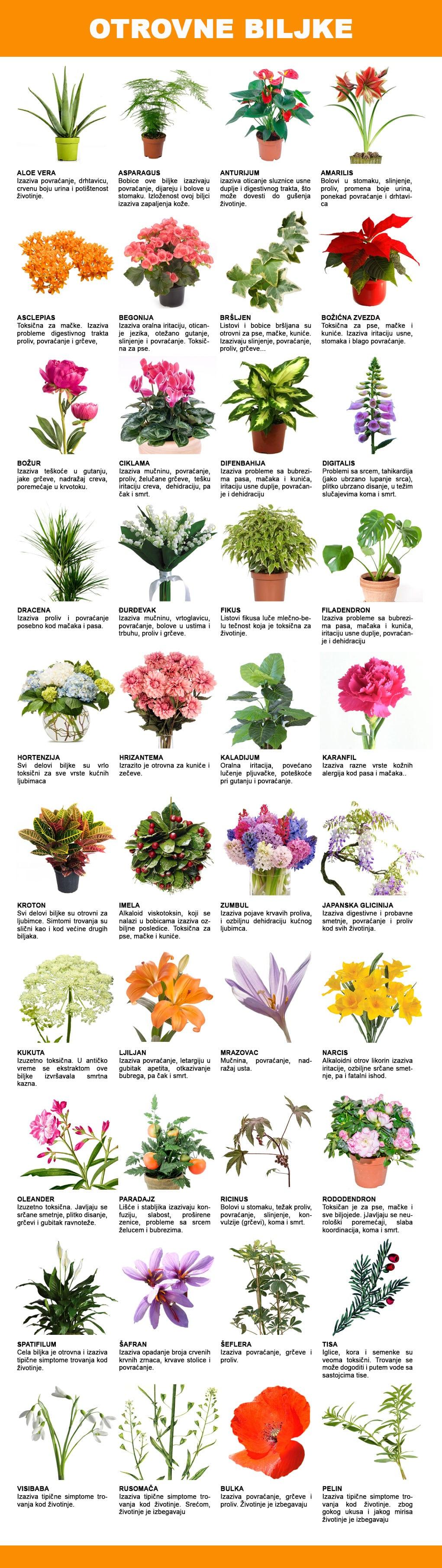otrovne biljke petface