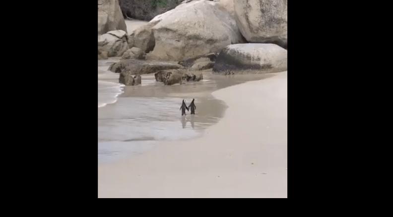 pingvini petface