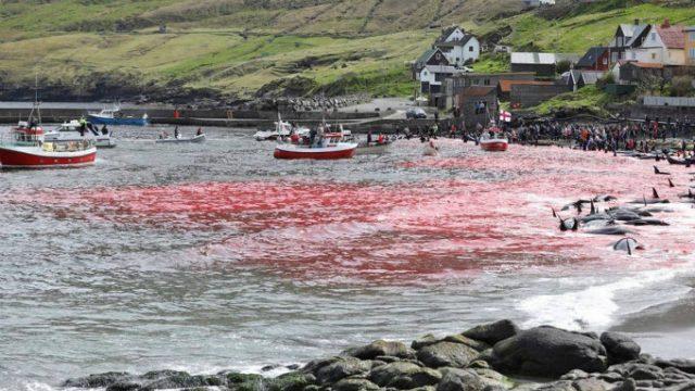krvav atlantski okean petface